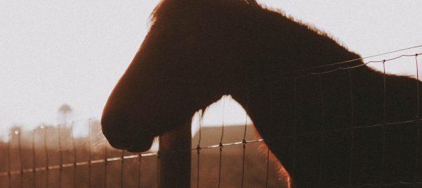 2d kerítés és ló